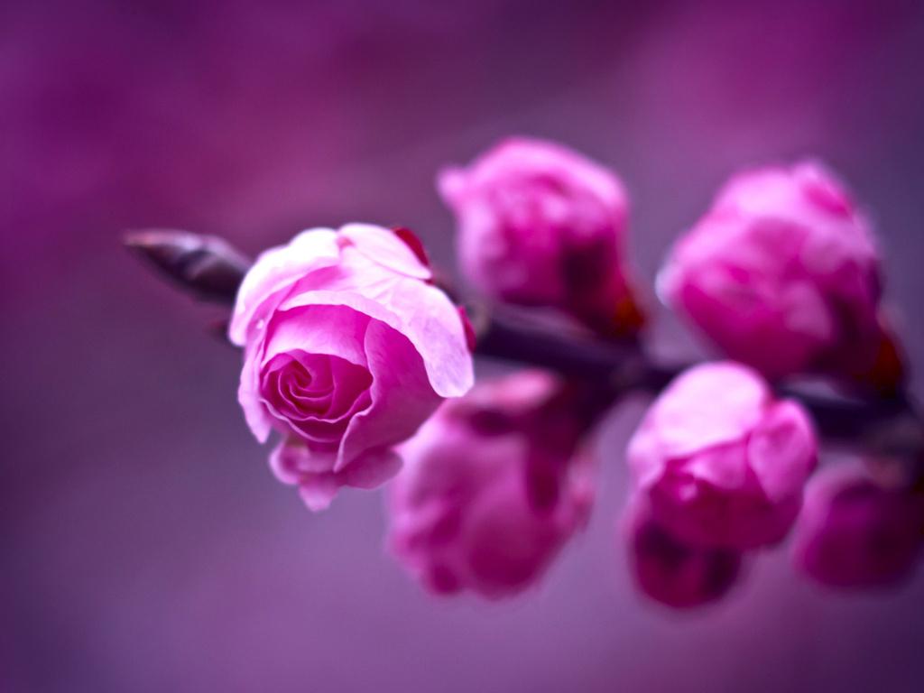 Картинки в розовом цвете фото 7