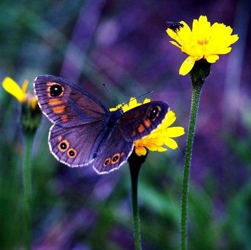 Бабочка сидит на желтом цветке