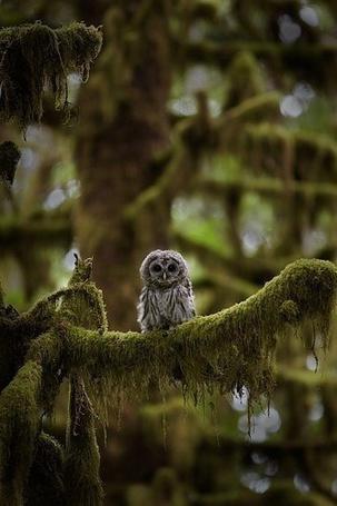 Фото Сова сидит на ветке дерева