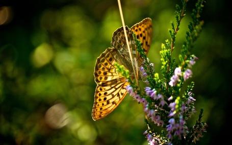 Фото Бабочка сидит на цветке (© ), добавлено: 05.11.2012 10:18