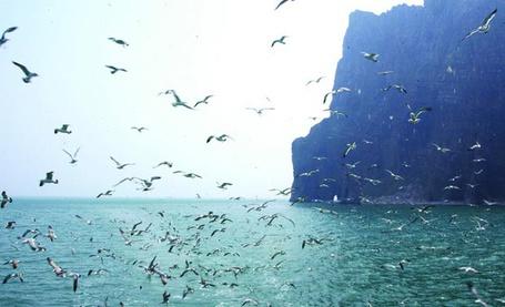Фото Множество чаек кружит над морем (© Morena), добавлено: 07.11.2012 15:14