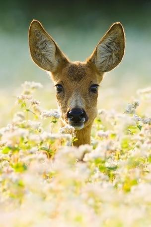 Фото оленята в цветах