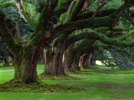 Фото Национальный парк Нью-Форест, Англия /  New Forest, England (© Morena), добавлено: 13.11.2012 13:16