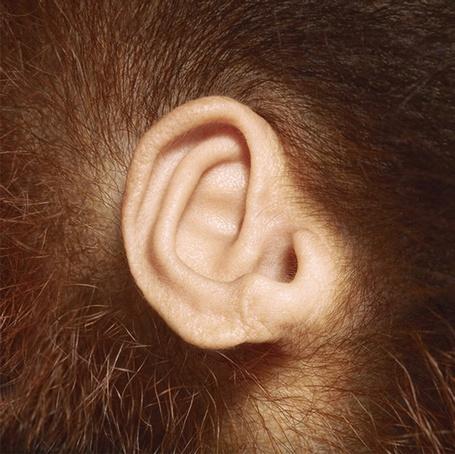 Фото Маленькое обезьянье ухо, работа известного фотографа Tim Flach