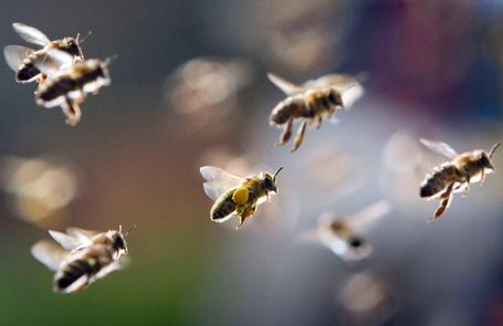 Фото Летящие пчелы (© Danusha), добавлено: 27.11.2012 16:02