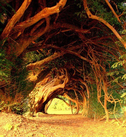 Фото Тысячелетние деревья, Западный Уэльс / Millennial trees, West Wales (© ), добавлено: 27.11.2012 16:40
