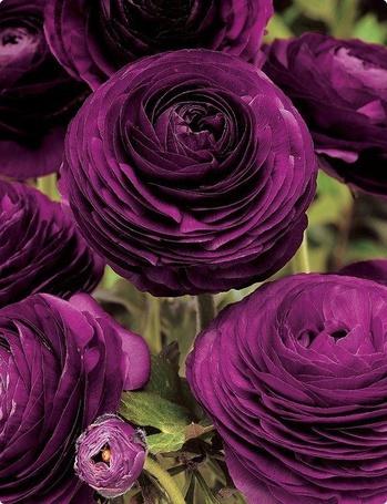 Фото Фиолетовые цветы (© ), добавлено: 27.11.2012 22:19