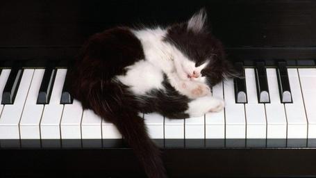 Фото Котик спит на пианино (© Black Tide), добавлено: 27.11.2012 23:35
