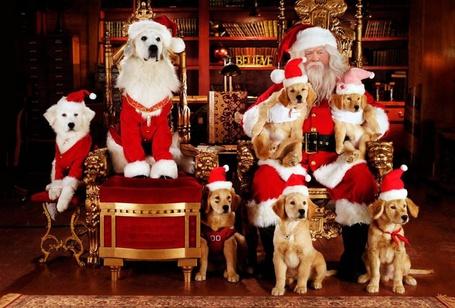 Фото Санта Клаус в окружении собак