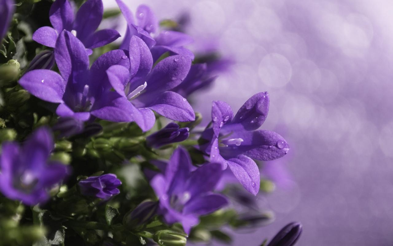 Интересные картинки цветов 6