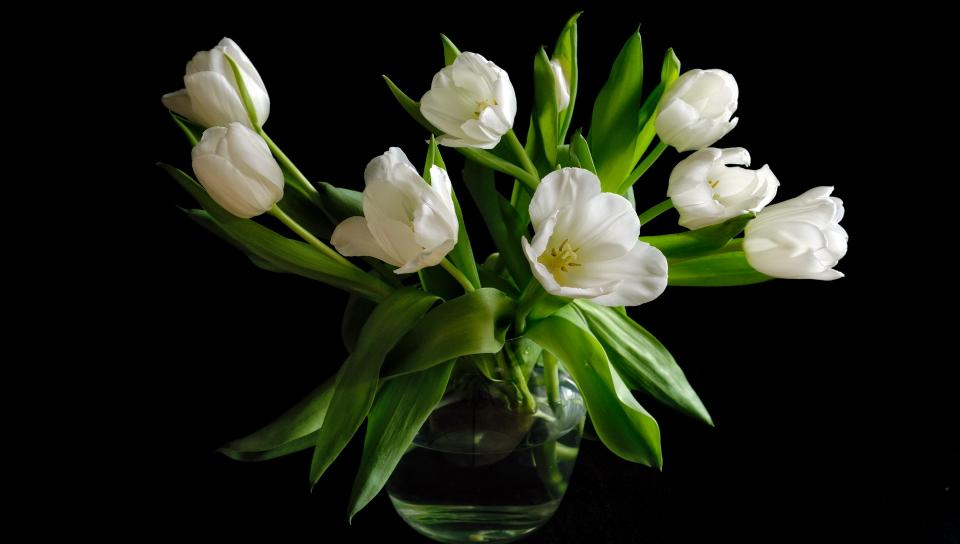 Цветы на темном фоне картинки 6