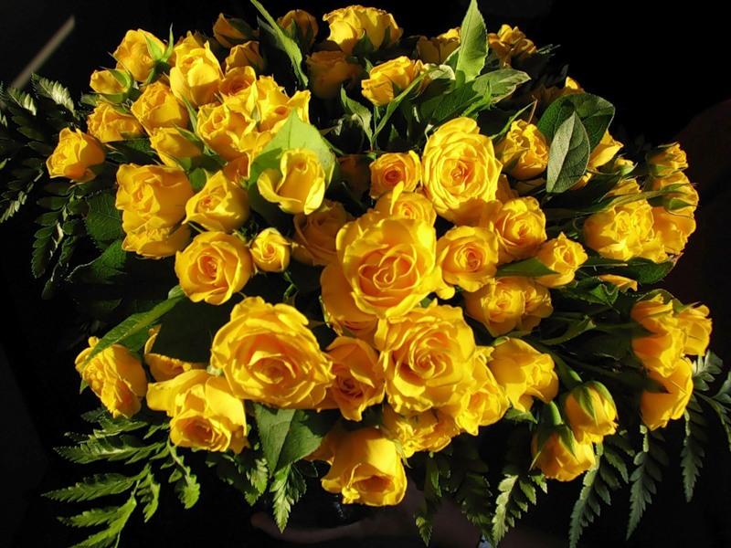 Желтые цветы на черном фоне