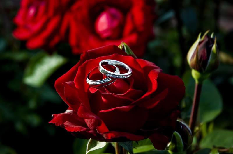 бриллианты и розы фото отличие бензиновой даже