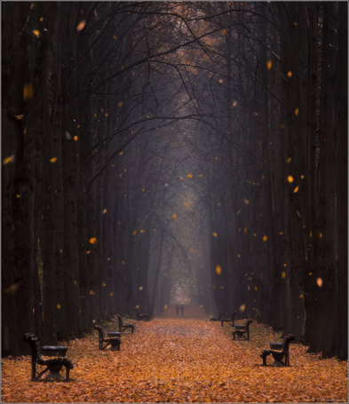 Фото Листопад, фотограф Влад Соколовский (© Morena), добавлено: 19.11.2012 09:42