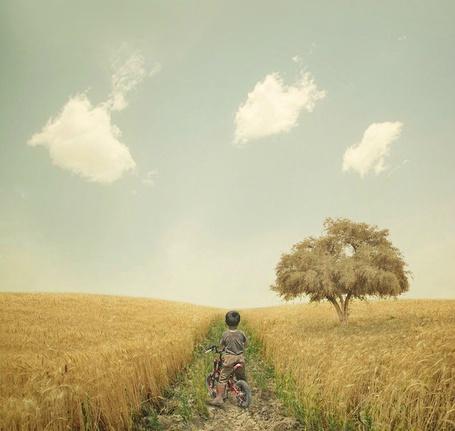 Фото Мальчик на велосипеде стоит на дороге в поле