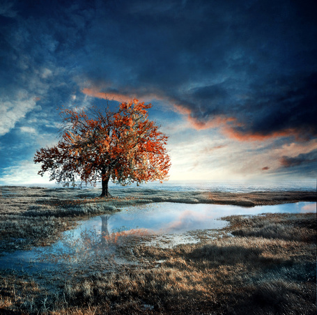Фото Осеннее дерево на краю небольшого водоёма, фотохудожница - Барбара Флорчик (© INFERI), добавлено: 03.12.2012 22:02