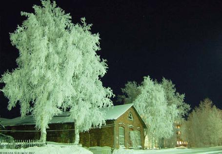 Фото Покрытые инеем деревья рядом с кирпичным зданием на фоне черного ночного неба