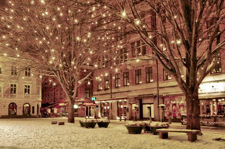 Фото Деревья украшенные гирляндами в зимнем городе