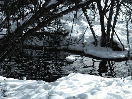 Фото Ручей, который скоро превратится в лед, мирно течет (© StepUp), добавлено: 14.12.2012 23:29