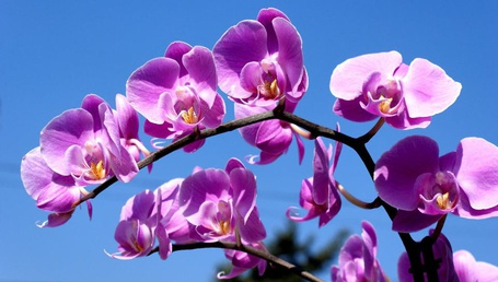Фото Веточка орхидеи
