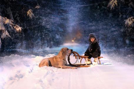Фото Мальчишка сидит на саночках и рядом на снегу лежит собака