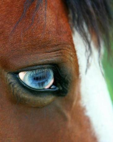 Фото Красивый лошадиный глаз