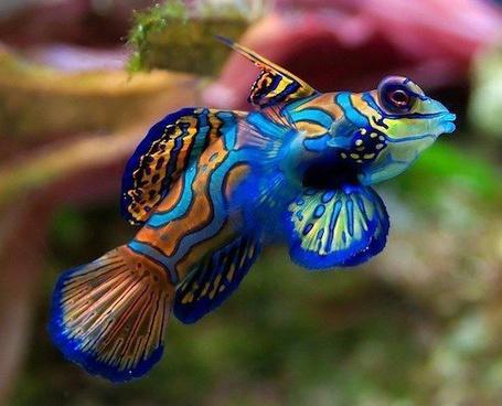 Фото Разноцветная рыба (© Anna Sun), добавлено: 22.12.2012 16:33
