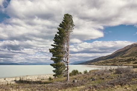 Фото Дерево, ветви которого повернуты в одну сторону, растет на берегу озера, фотограф Peter Beavis / Питер Бевис
