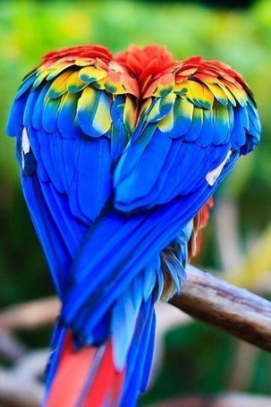 Фото Нахохлившийся попугай ара сидит на ветке дерева (© ), добавлено: 23.12.2012 10:35