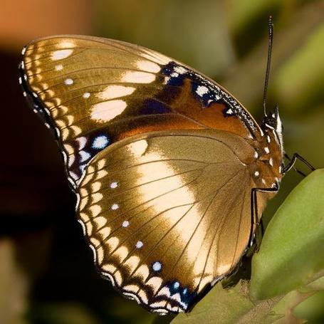 Фото Яркая бабочка (© ), добавлено: 23.12.2012 19:48