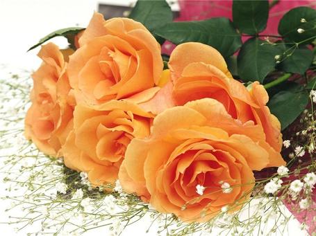 Фото Оранжевые розы (© Banditka), добавлено: 27.12.2012 21:06