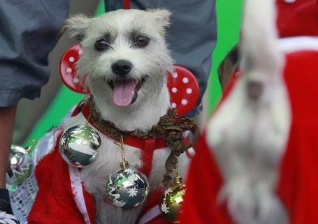 Фото Собака в новогоднем костюме
