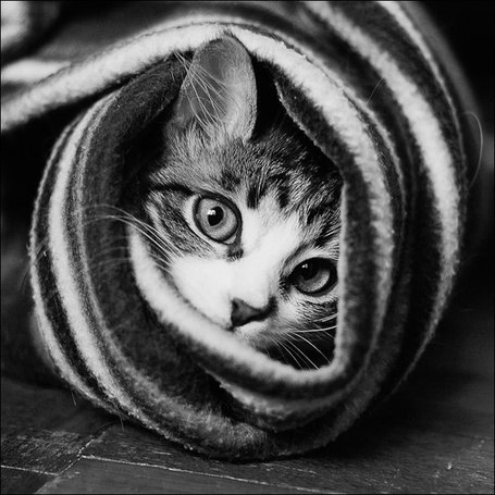 Фото Кот укутан в шарфе (© Black Tide), добавлено: 31.12.2012 19:31