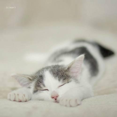 Фото Спящий кот