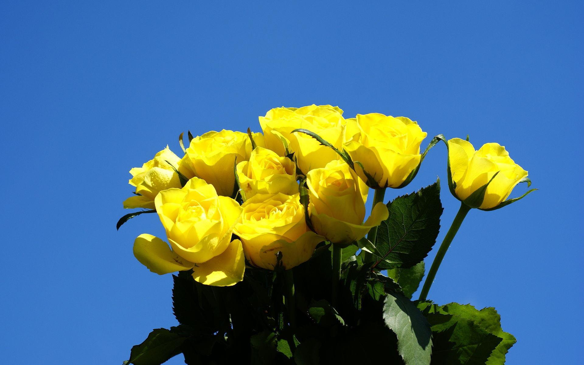 Цветы желтые и голубые