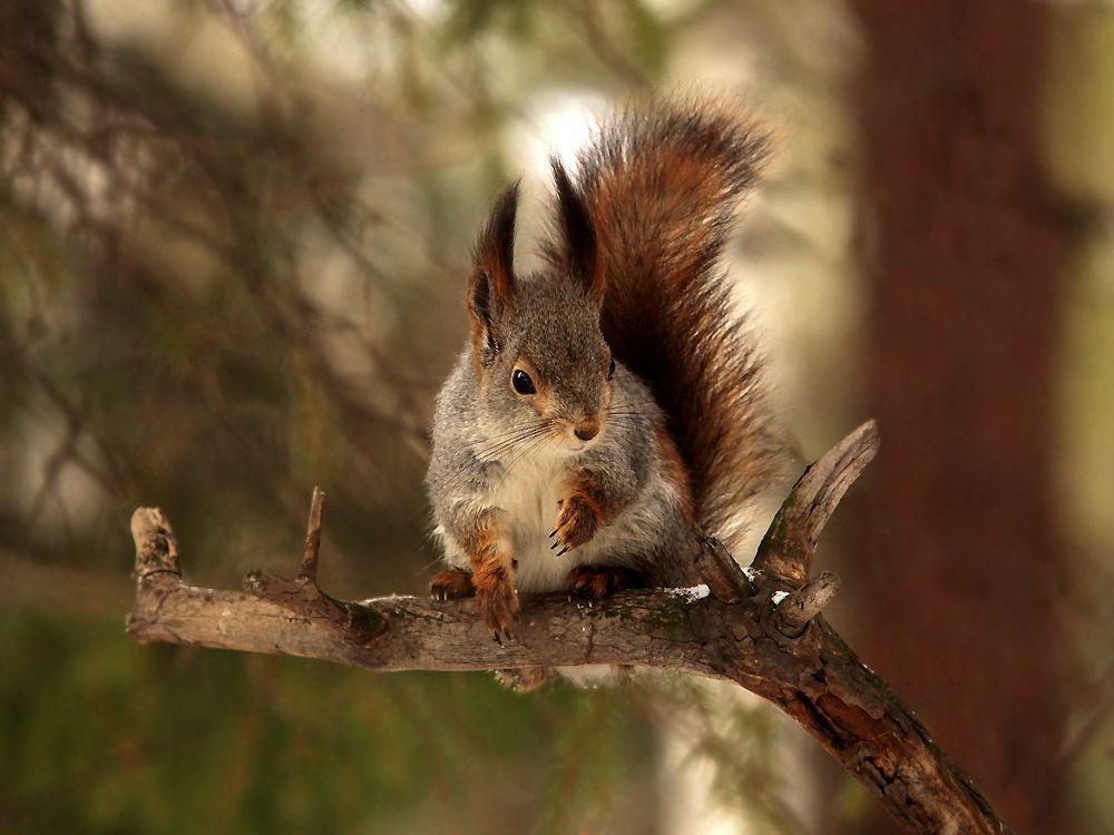 самым белки на деревьях фото большинстве случаев, даже