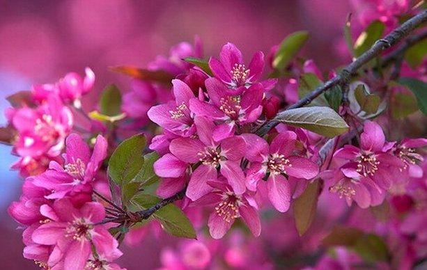 Banco de fotos primavera, sakura, flor