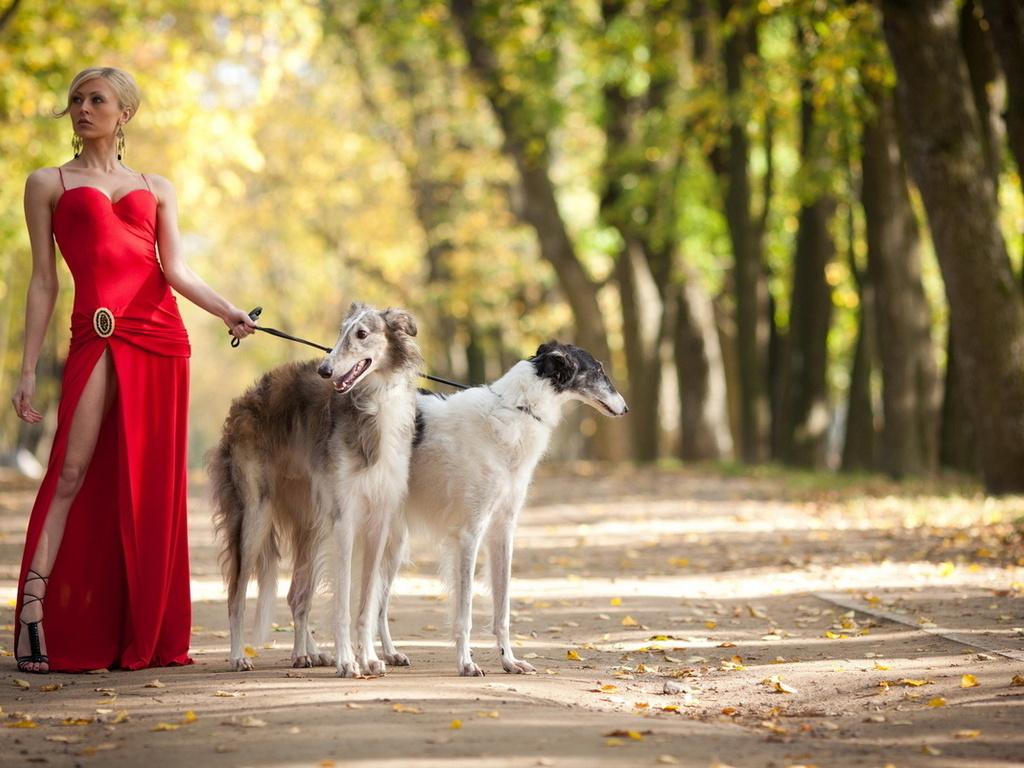 Картинки прогулка с собакой 6