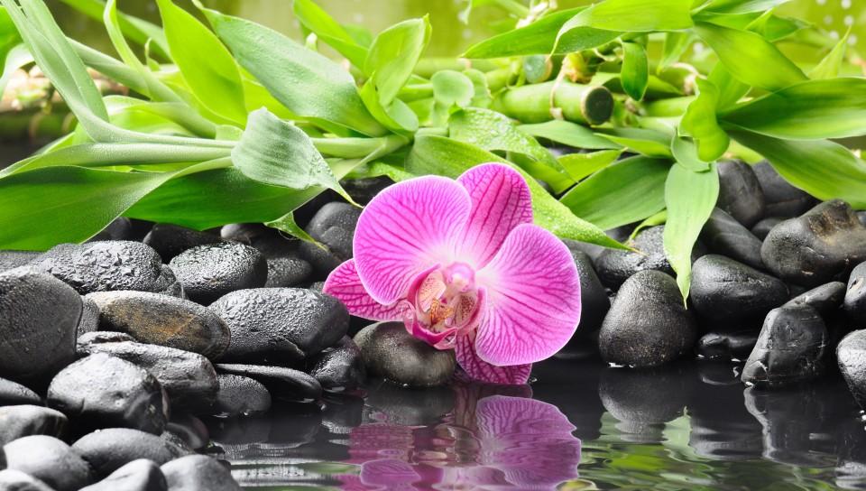 розовой орхидеи лежит возле воды на ...: photo.99px.ru/photos/83124