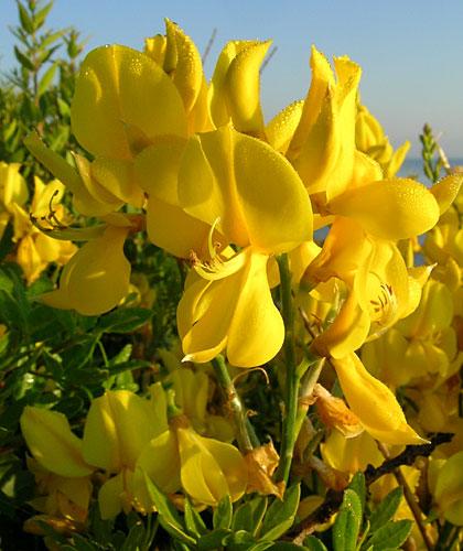 Фото Жёлтые орхидеи