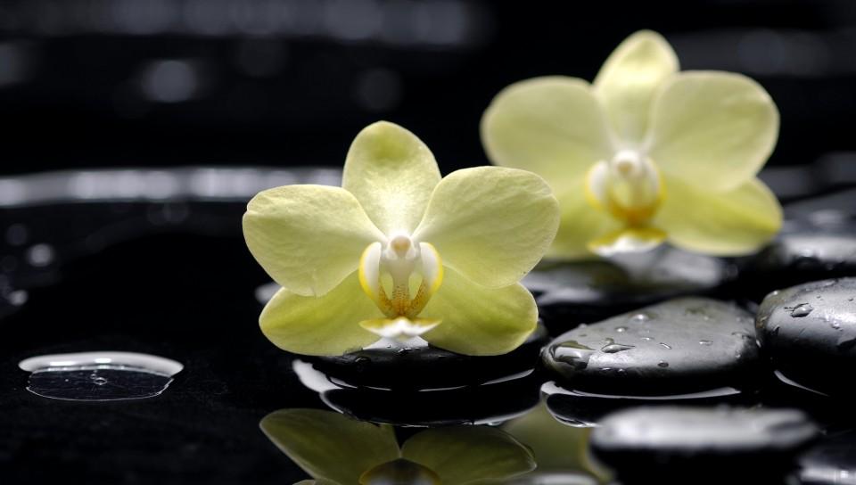 Фото Желтые орхидеи, лежащие на черных ...: photo.99px.ru/photos/85194