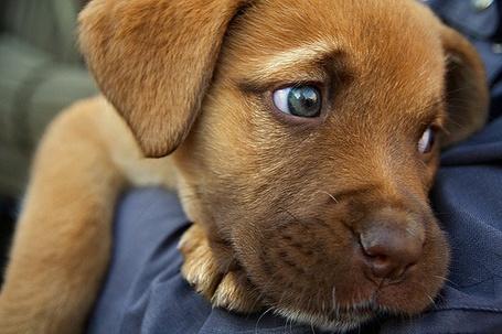 Фото Собачка грустно смотрит в сторону