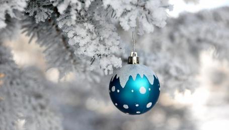 Фото Елочный шарик, висящий на заснеженной еловой ветке