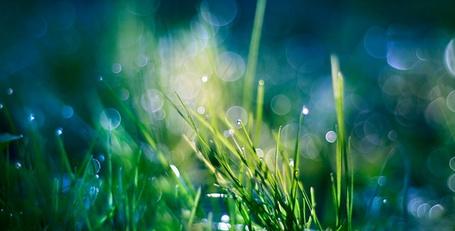 Фото Трава в каплях росы, фотограф Sabine Fischer (© Кофе мой друг), добавлено: 03.01.2013 23:04