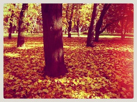 Фото Деревья осенью  (© Nia4ka), добавлено: 06.01.2013 00:15