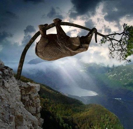 Фото Слон ползет по дереву на фоне солнечных лучей и озера