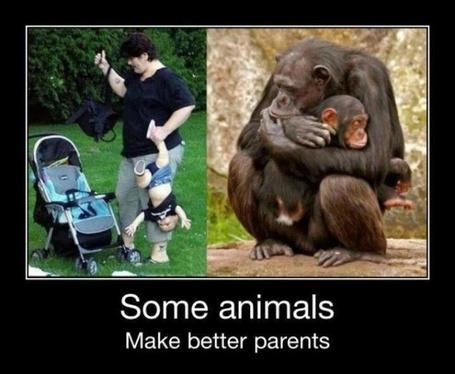 Фото Some animals make better parents / Некоторые животные становятся гораздо лучшими родителями, чем люди