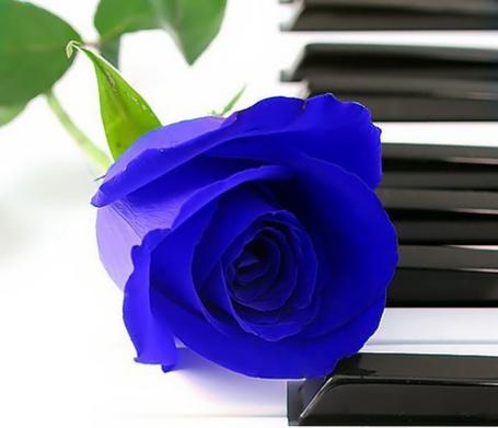 Фото Синяя роза на пианино (© Black Tide), добавлено: 11.01.2013 03:16