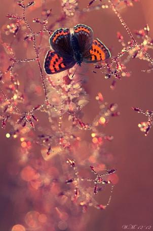 Фото Красивая бабочка на покрытых каплями веточках, фотограф Wil Mijer