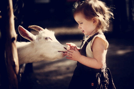 Фото Девочка трогает ручками белую козу, находящуюся в стойле, работа фотографа Юлии Отто